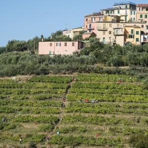 Cinque Terre: Randonnées & Vin
