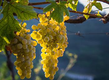 wine-tour-mana