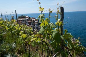 wine tasting tour manarola cinque terre