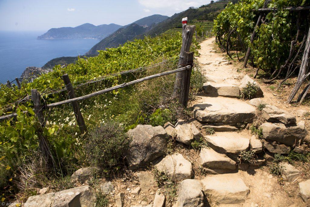 hiking manarola cinque terre