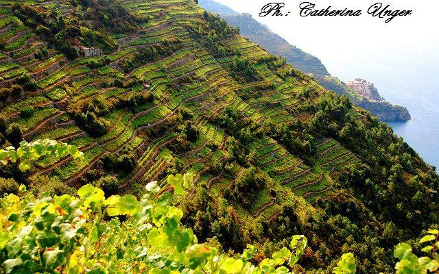viticoltori cinque terre