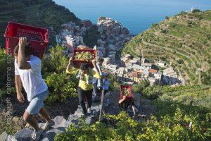 vineyards cinque terre