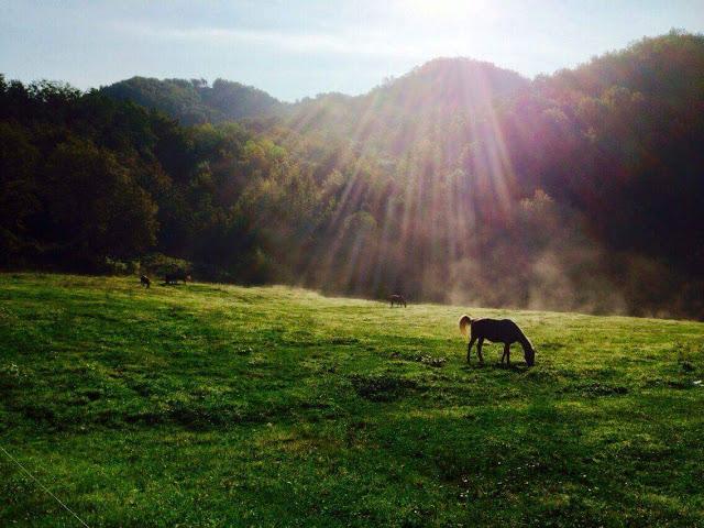 horse riding tour cinque terre