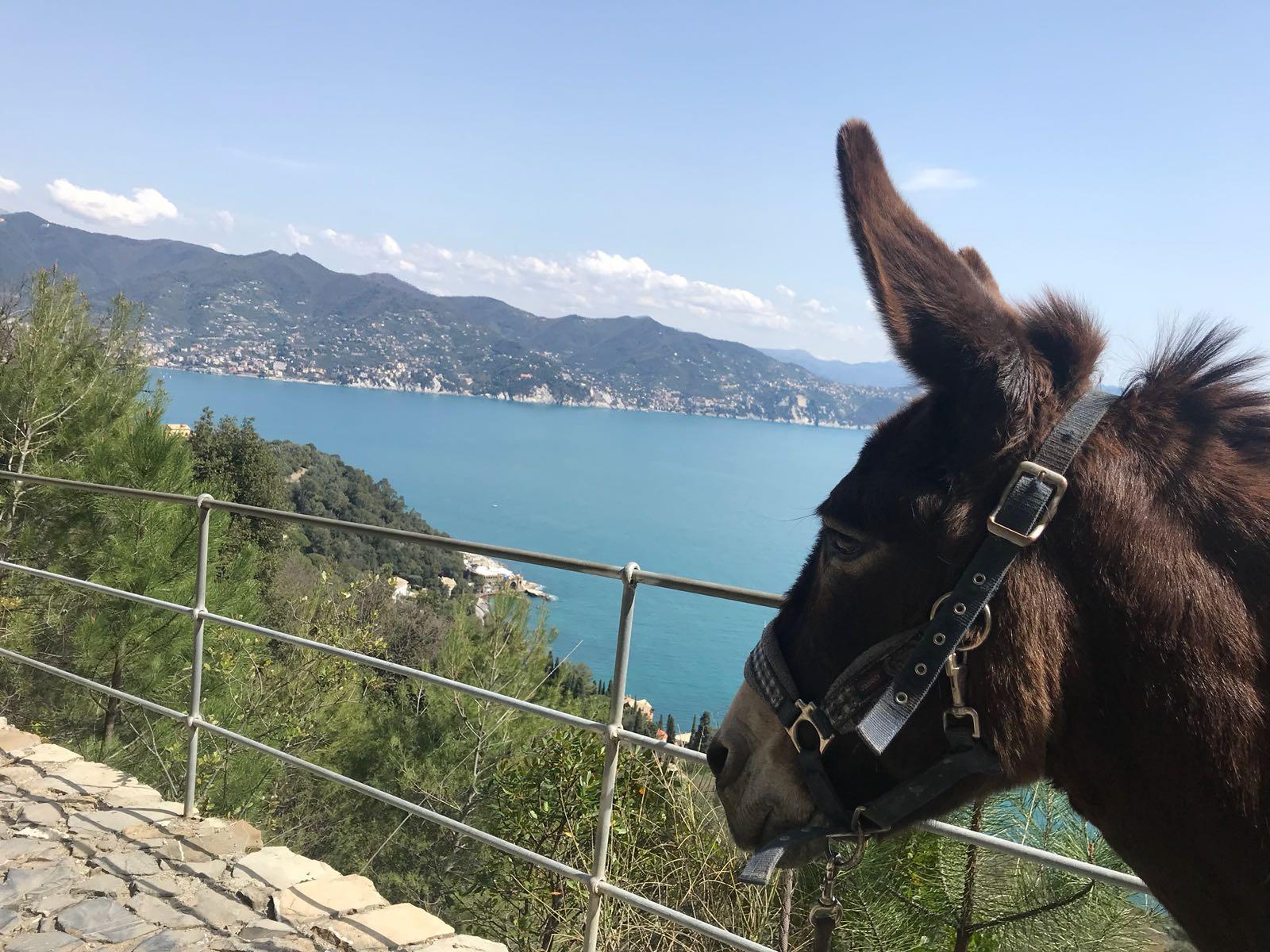 Portofino Donkey Trekking_4