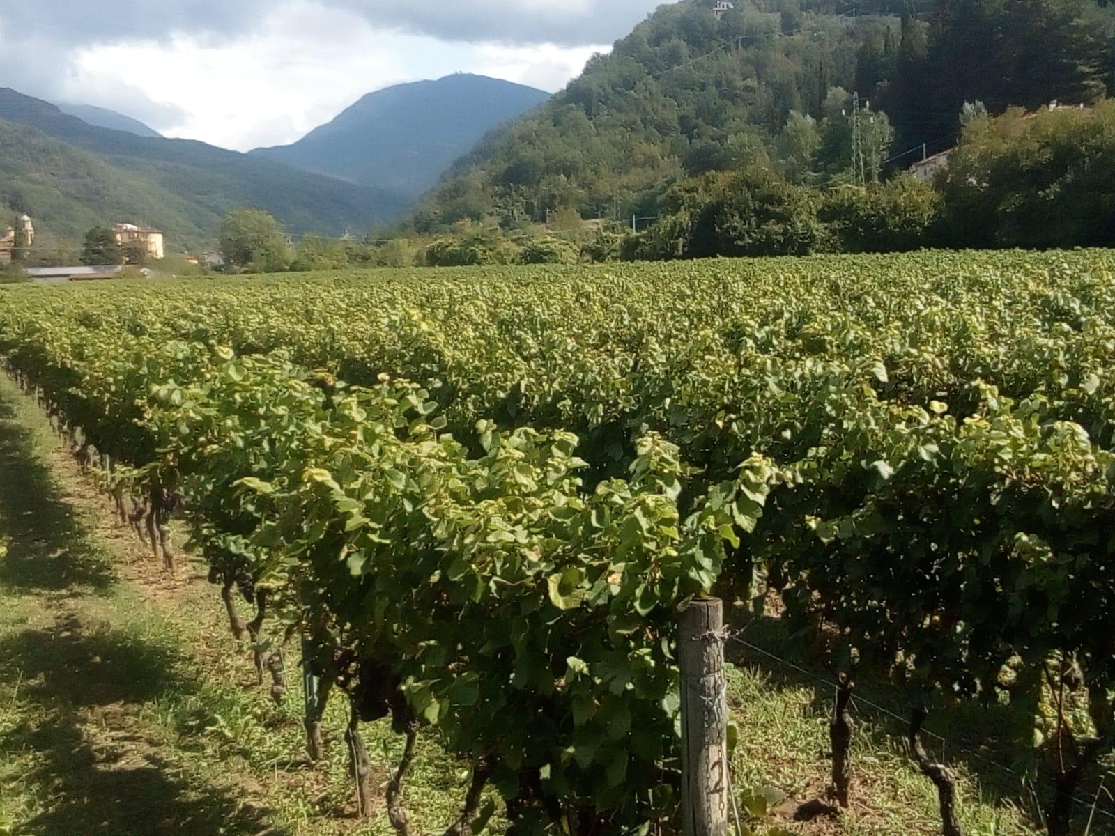 wine tour colli di luni