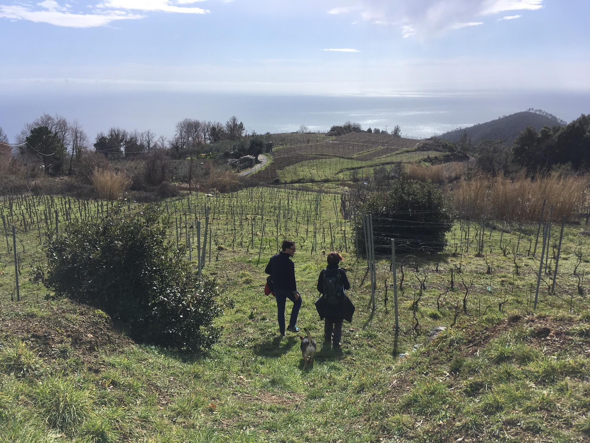 wine tour bonassola