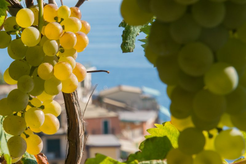 sensory wine tasting Manarola