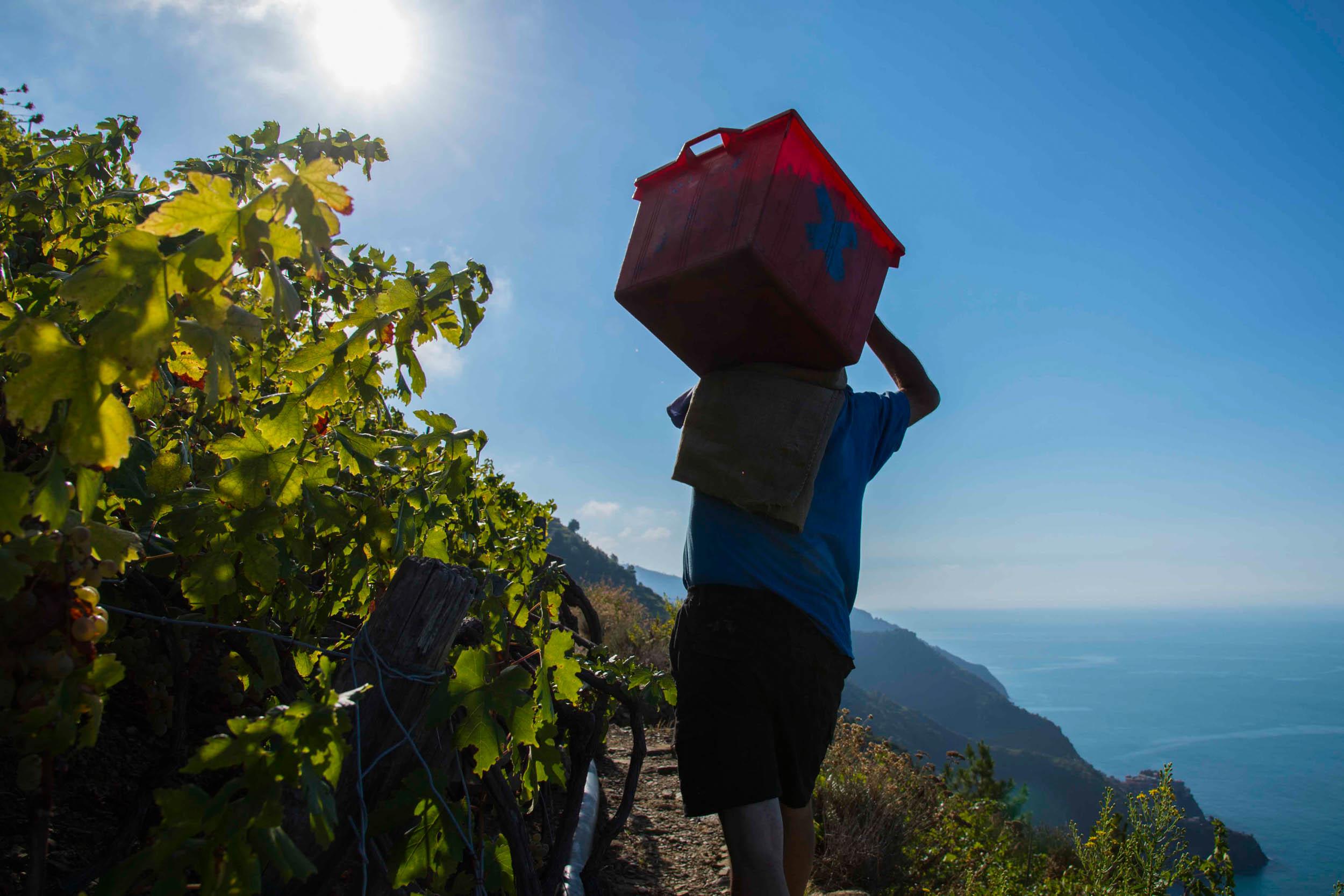 vino delle Cinque Terre