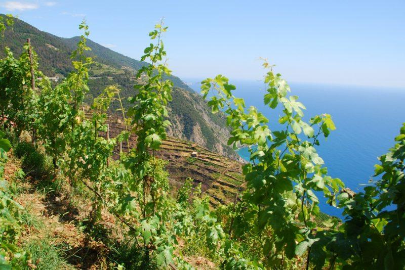 wine_tasting-at_sunset_Riomaggiore