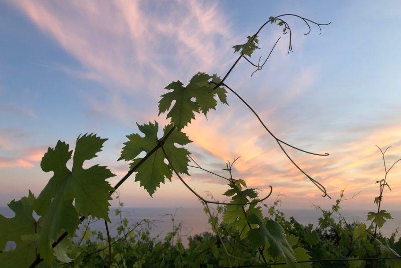 wine_tasting-vineyards