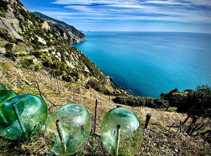 vertical wine tour Riomaggiore